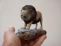 BARBARY LION (Leon del Atlas)