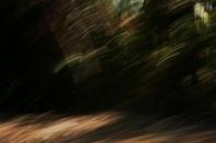 bosque encantado 1
