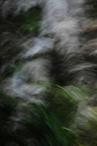 bosque encantado 4