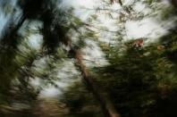 bosque encantado 5
