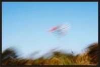 el vuelo del pajaro