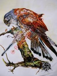 (Falco tinnuculos) and (Aegithalos caudatus)