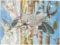 Falcons rusticolus Hunting Ardea cinerea