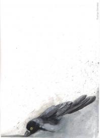 Fragmentos Voladores
