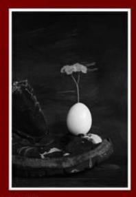 Serie Huevos. Foto. Comunión
