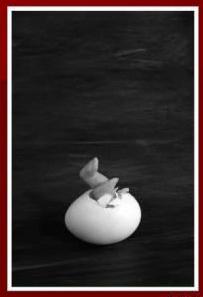 Serie Huevos. Foto. El momento sublime